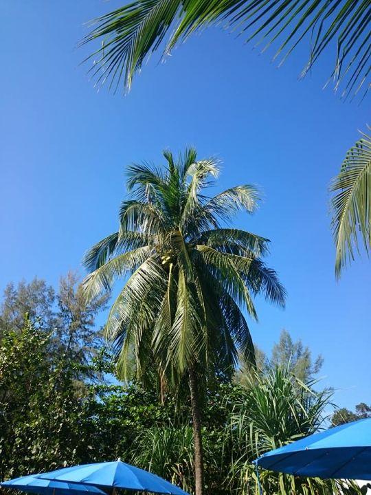 Ausblick Lah Own Resort