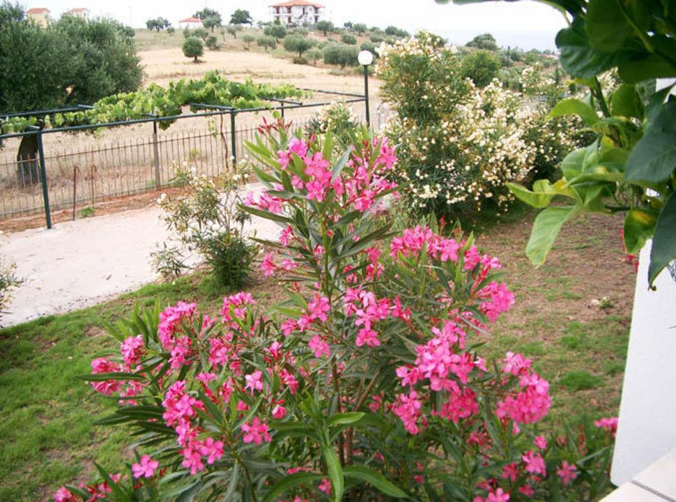 Geranion Village- Blick in den Garten Hotel Geranion Village
