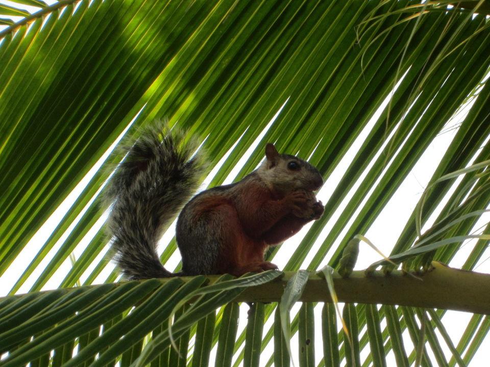 Fast wie unsere! Hotel & Club Punta Leona