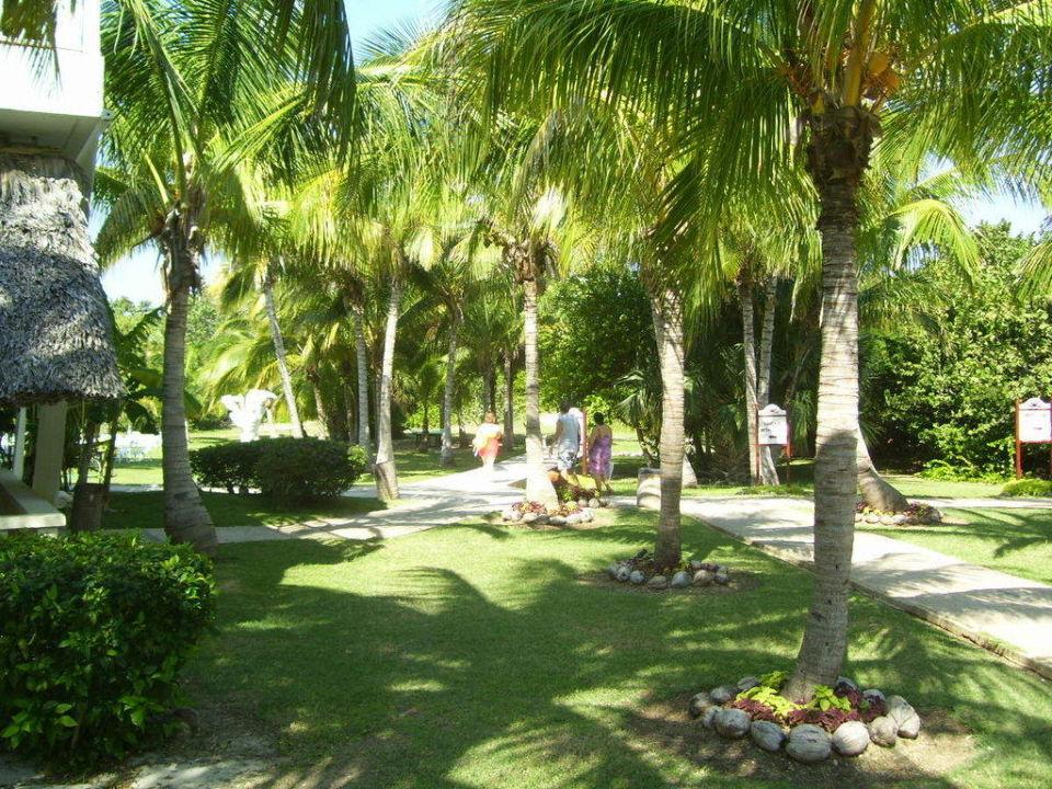 Garten Hotel Melia Las Antillas - Adults only
