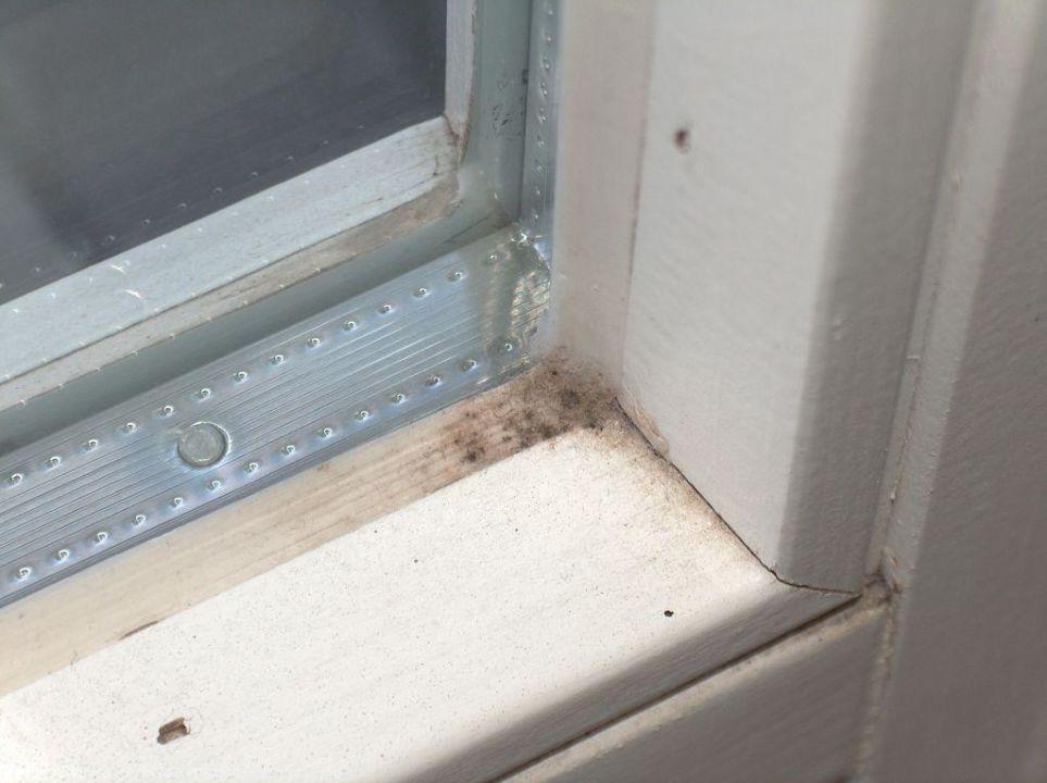 Turbo Schimmel am Fenster