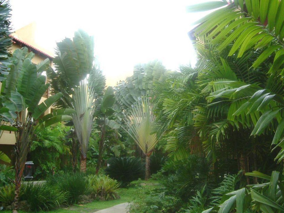 El Portillo Grand Bahia Principe El Portillo