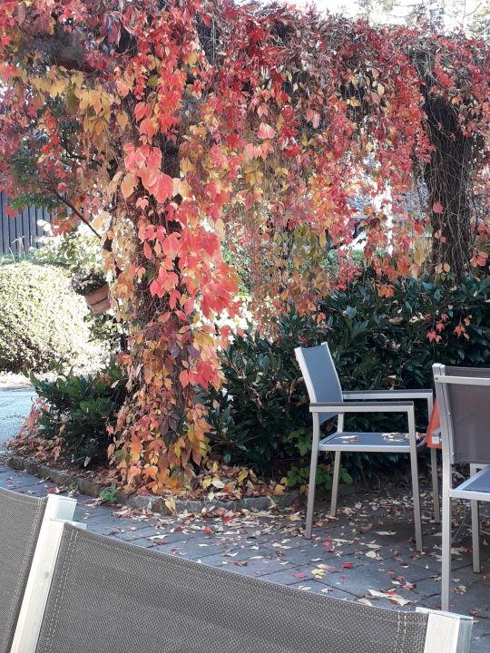 Gartenanlage Hotel Seeblick