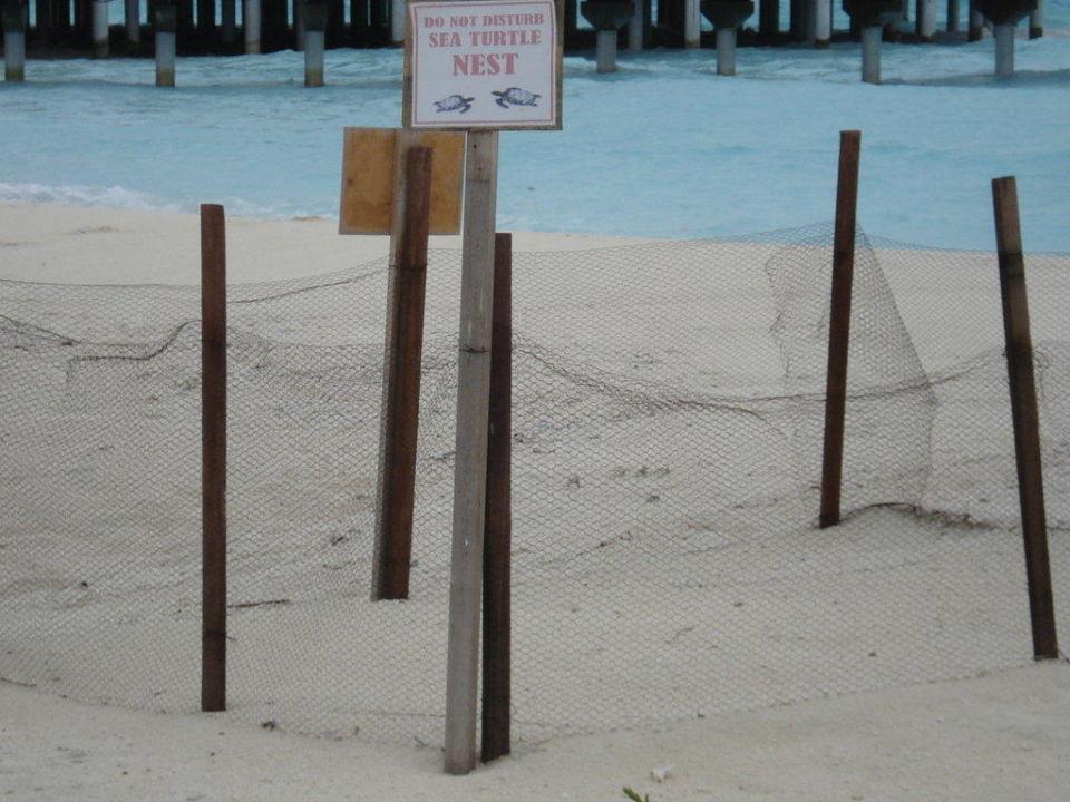 Gesichertes Schildkrötennest Sun Aqua Vilu Reef Maldives