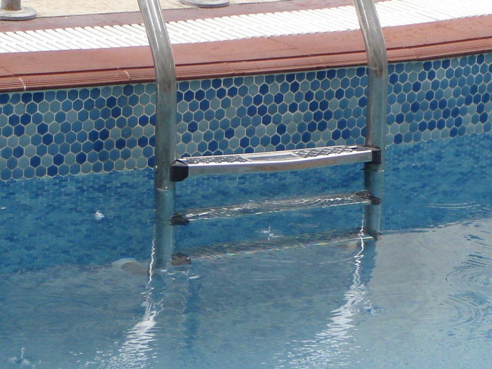 Wo ist das Wasser Sultan Sipahi Resort