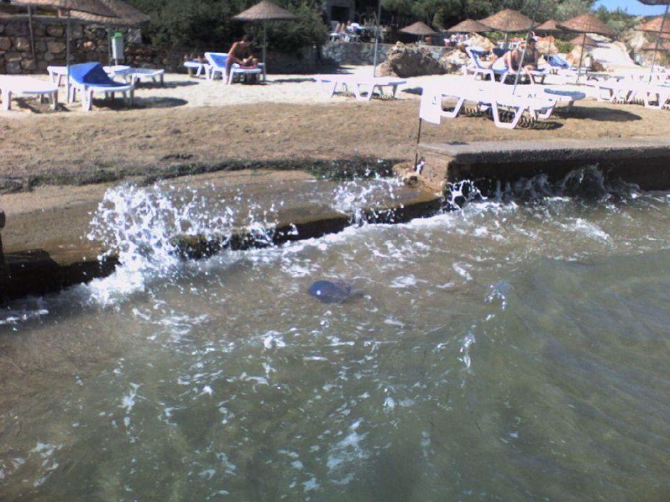 Quallen im Wasser Hotel Ayvalik Beach