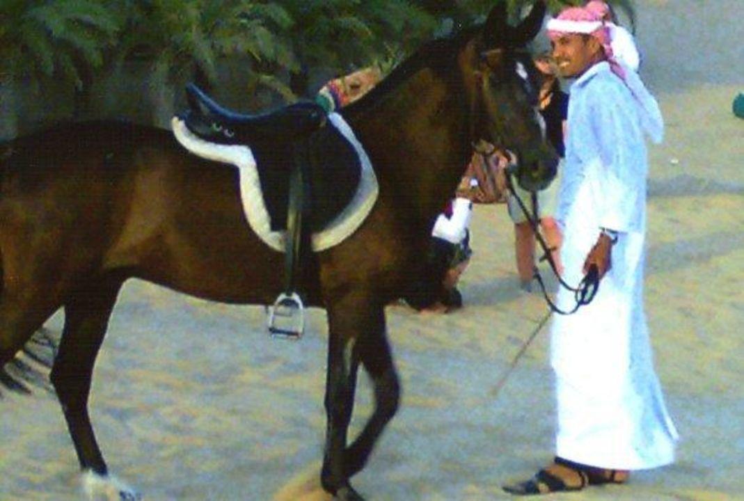 Show am Nachmittag Hotel Bab Al Shams Desert Resort & Spa