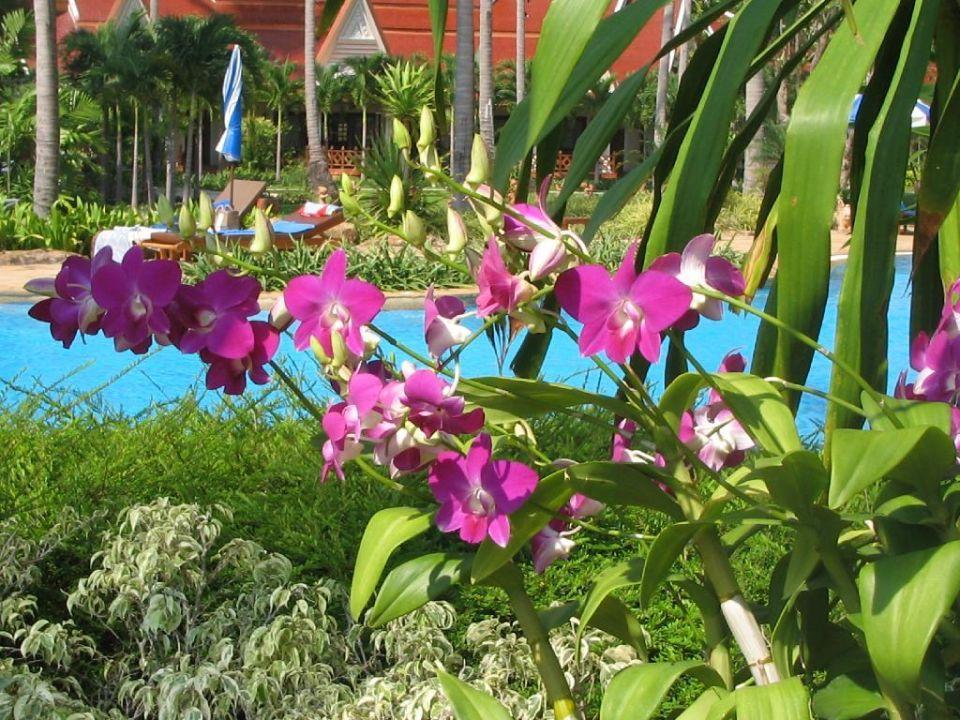 Und da wachsen sie wie Unkraut die Orchideen! Santhiya Tree Koh Chang Resort