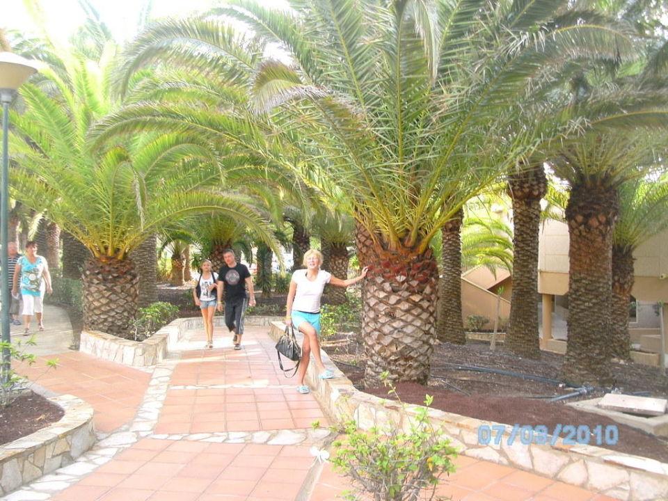 Weg zum Restaurant SBH Monica Beach Resort