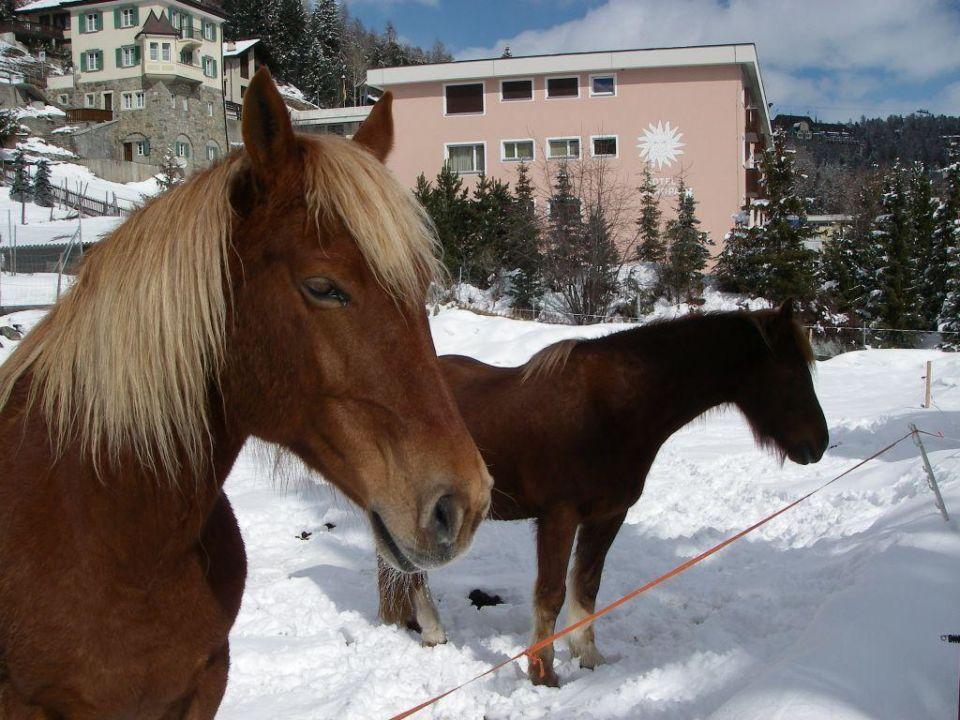 Pferde im Schnee am Hotel Europa Hotel Europa