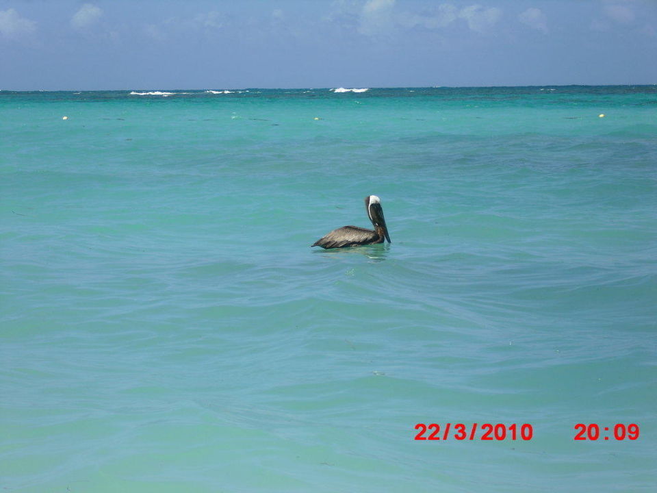 Pelikan Vista Sol Punta Cana
