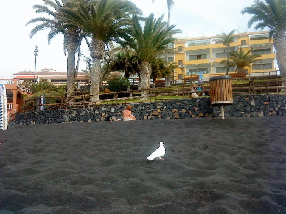 Hotel Bahia Flamingo Bewertung