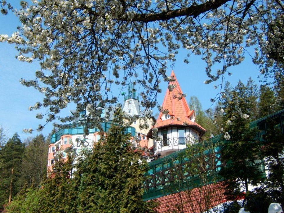 Kirschblüte am Hotel Las Hotel Las
