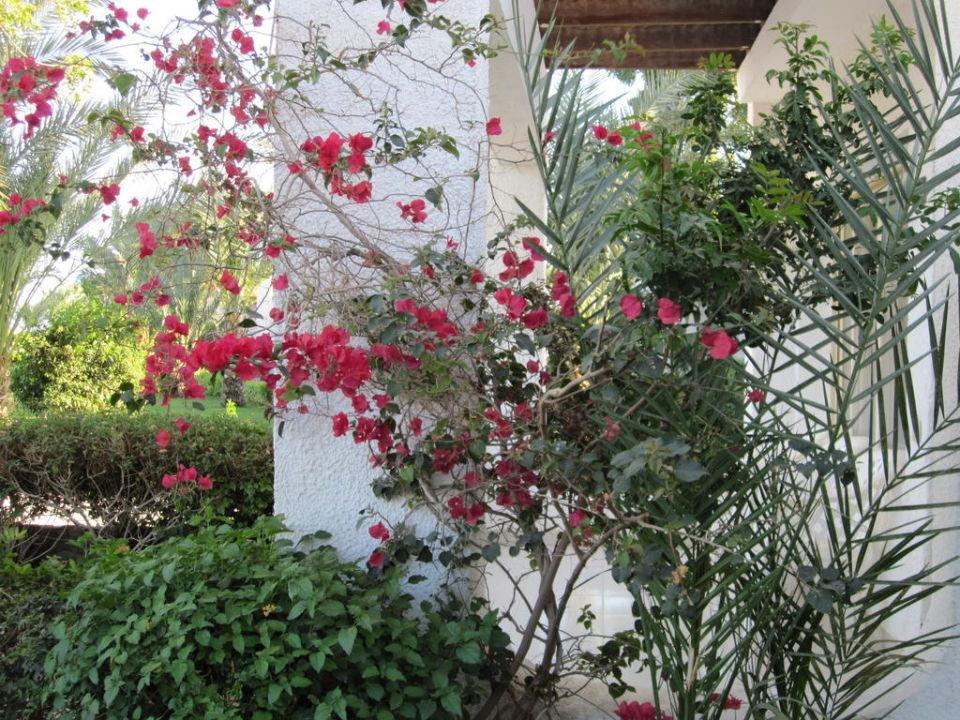 Blumen bei der Terrasse Menaville Safaga