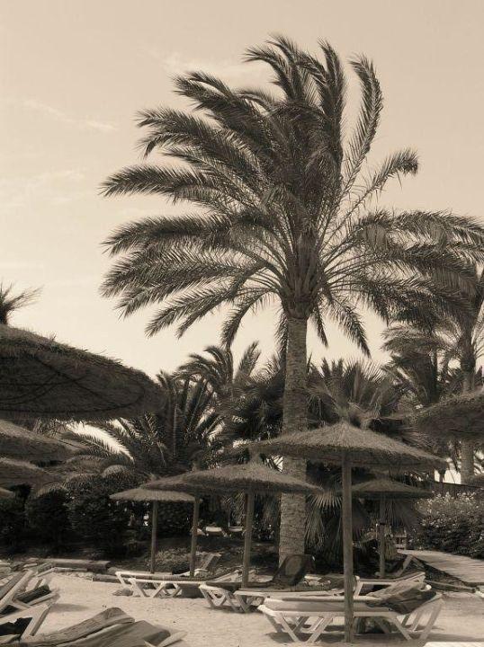 Palme Hotel Cava Dòro