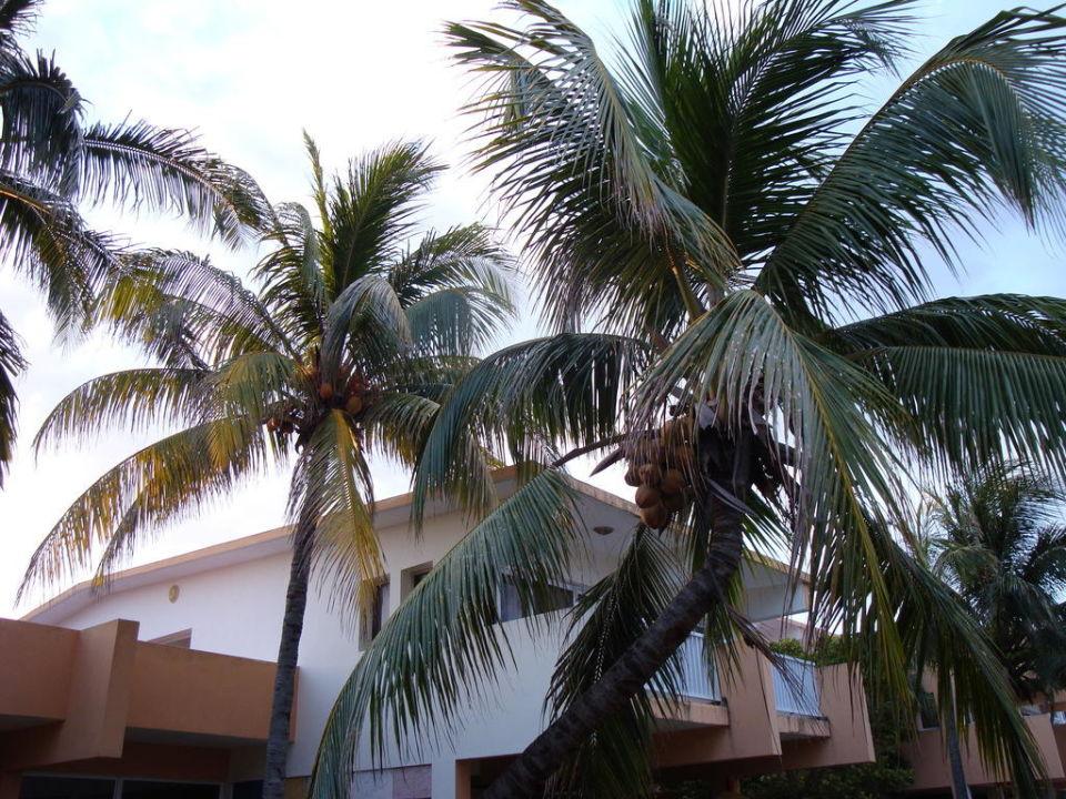 Roślinność w hotelu Gran Caribe Villa Tortuga