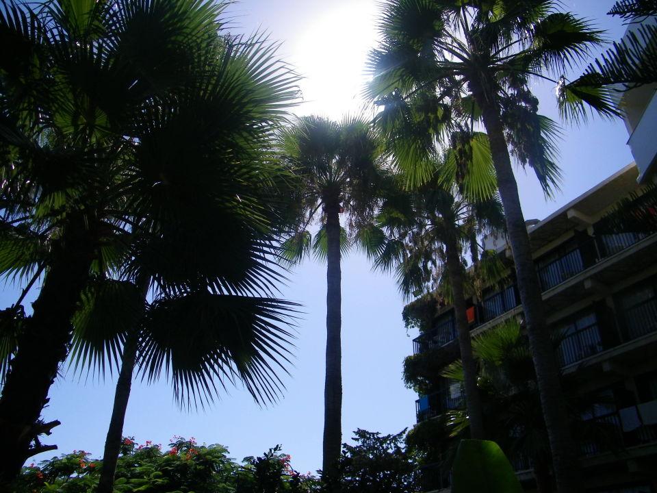 Ogrod Przy Basenie Hotel Veronica Paphos Holidaycheck