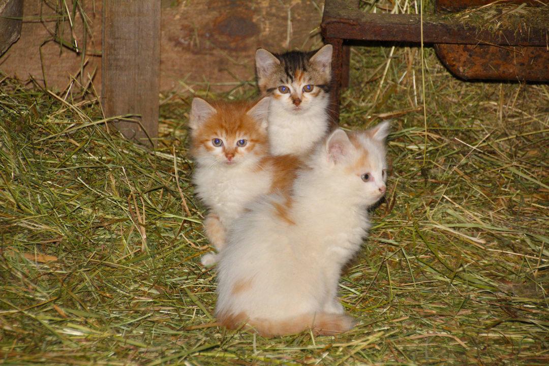 Babykatzen Bayern