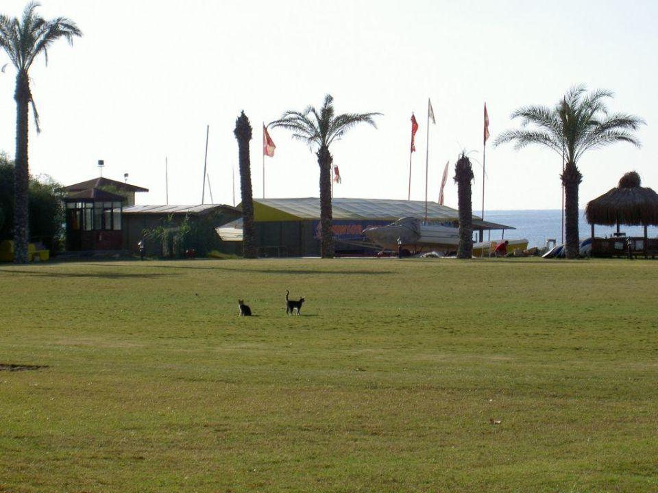 Katzen auf dem Fußballfeld Paloma Grida Resort & Spa Hotel