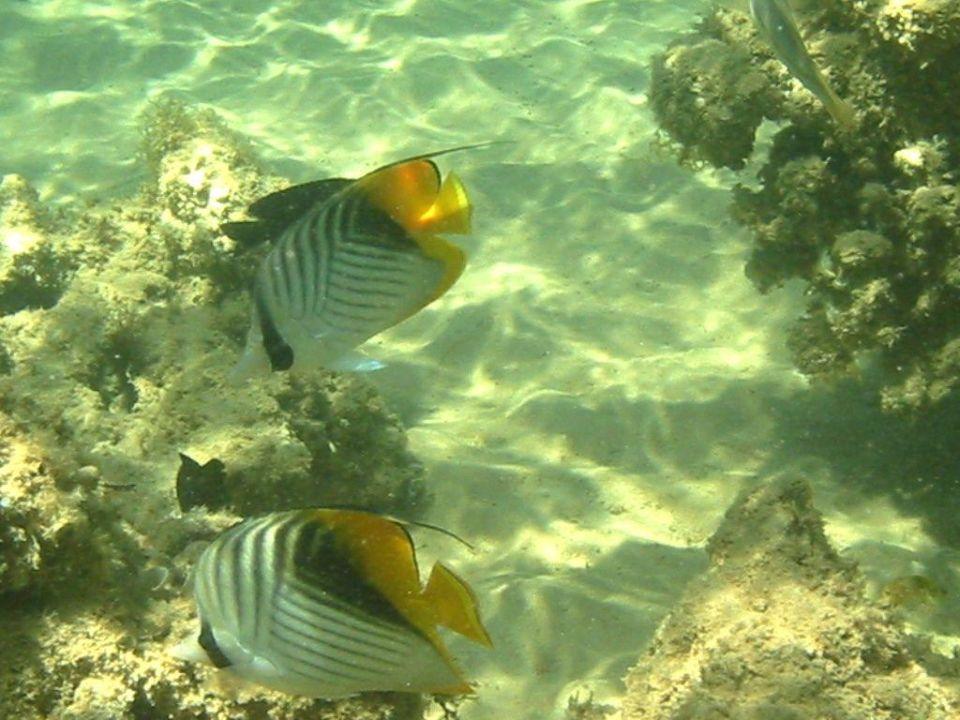 Unterwasserwelt am Strand Hotel Tropicana Nuweiba  (geschlossen)