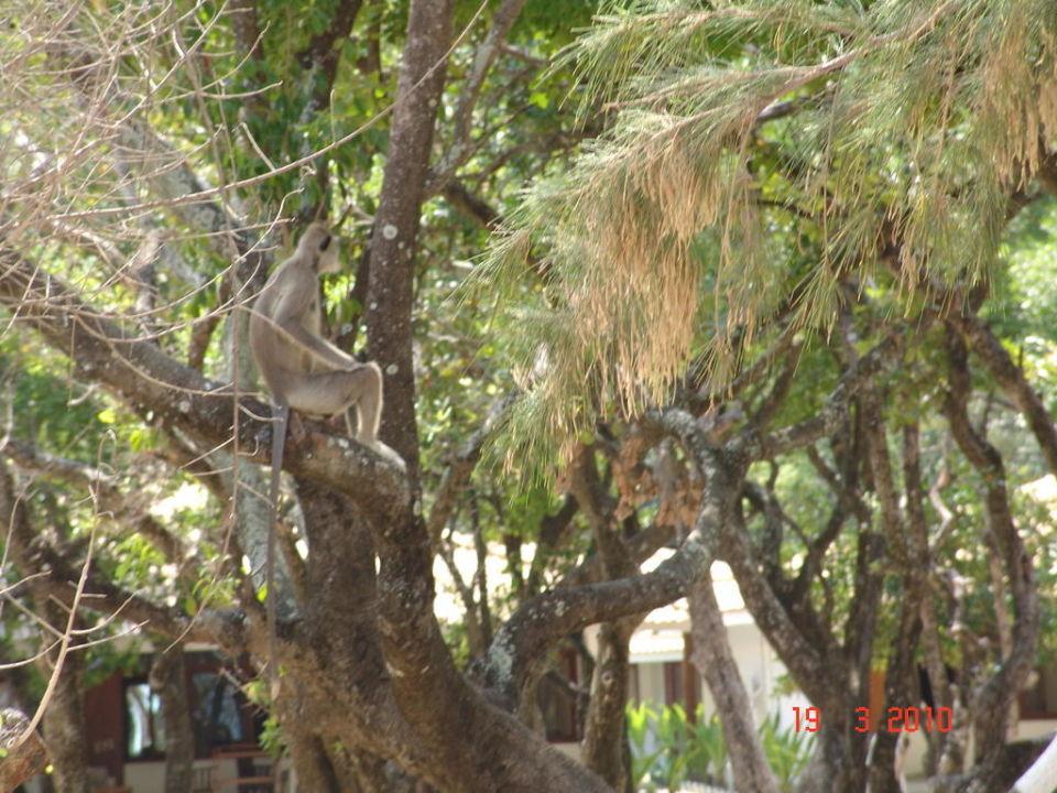 Affen Nilaveli Beach Hotel