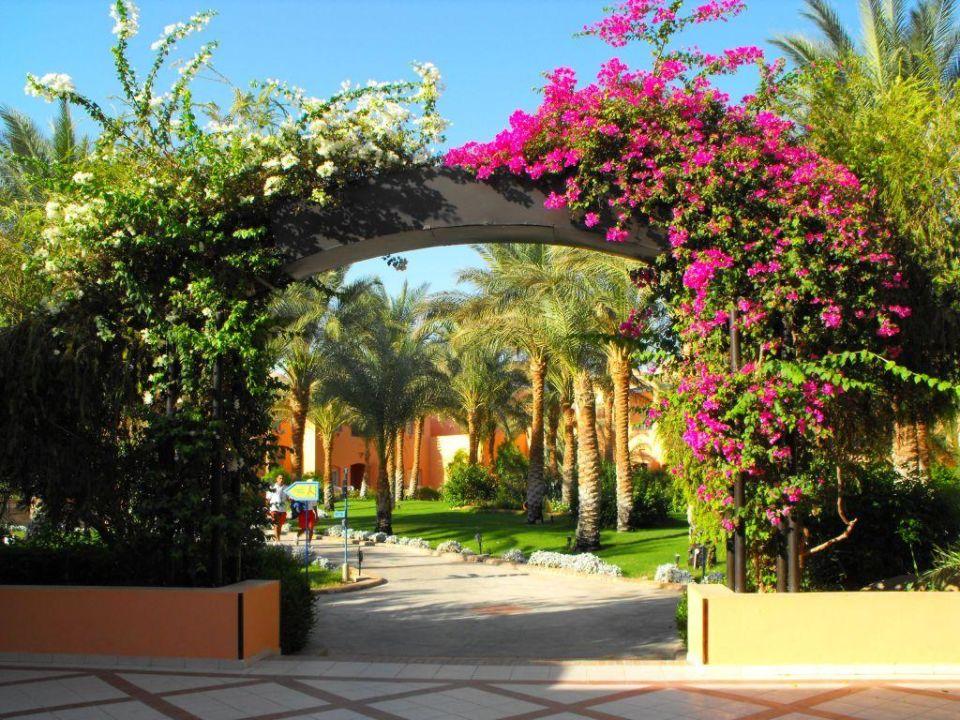 Ogród Jaz Makadi Oasis Club & Resort