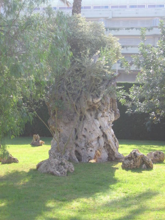 Schöne verschiedene einheimische Bäume im Garten\