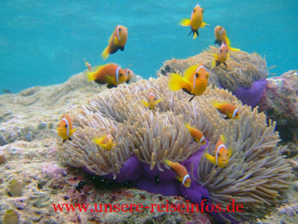 Nemos am Hausriff Fihalhohi Island Resort
