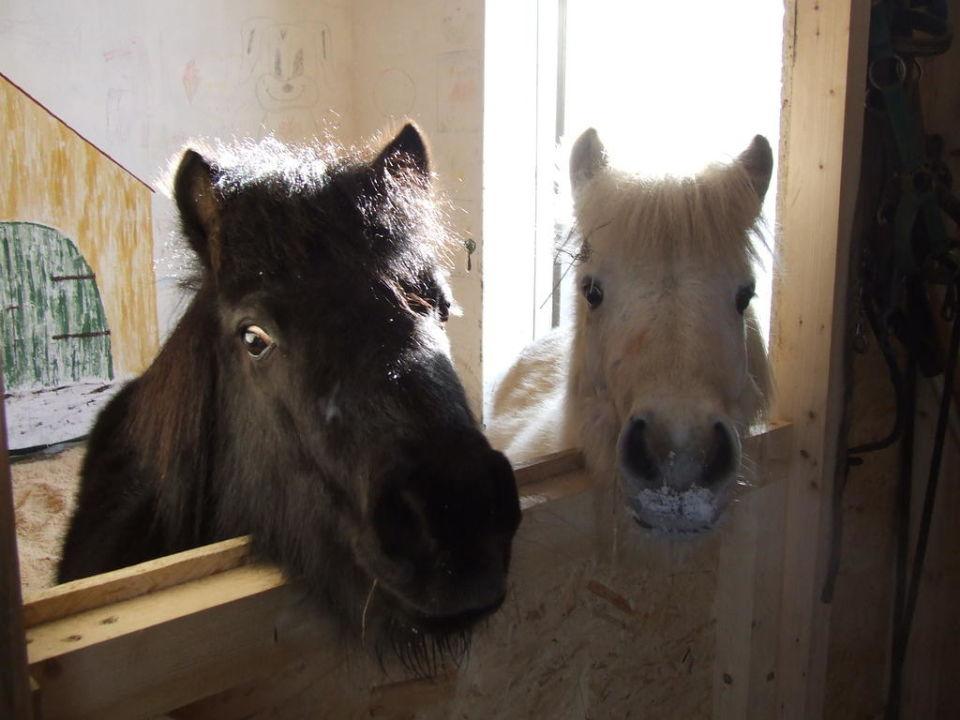 Mona und Lisa freuen sich aufs Ausführen Ferienhof Winter  (geschlossen)