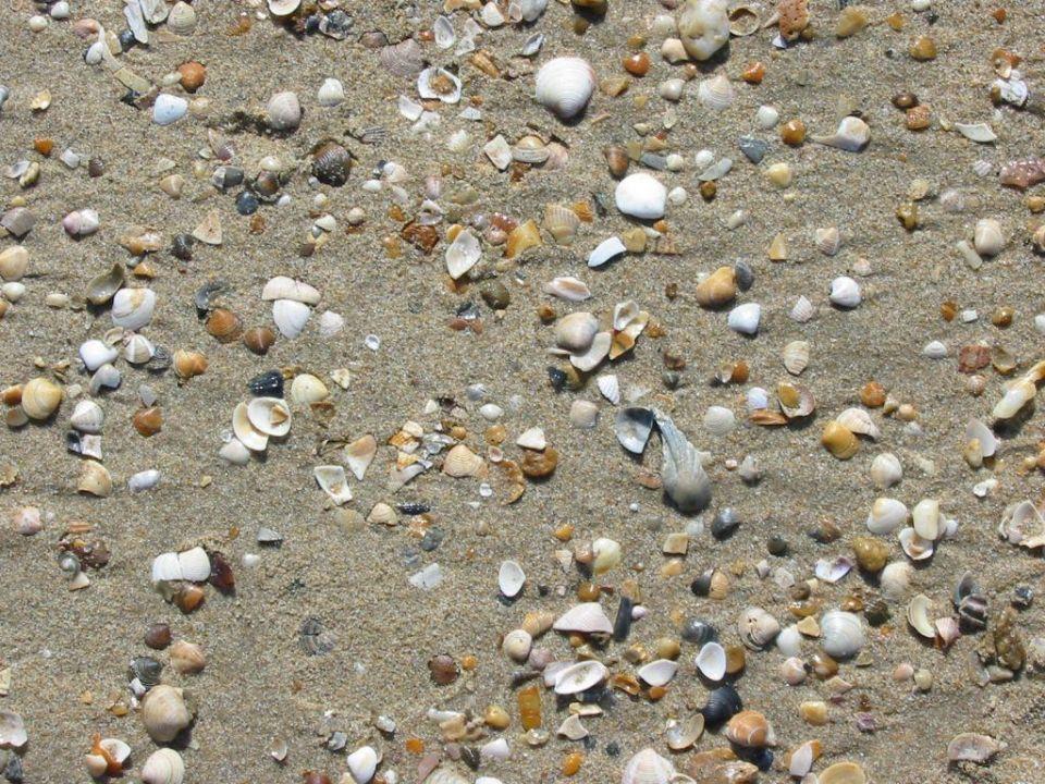 Muscheln ohne Ende... aber nicht wirklich schöne TUI FAMILY LIFE Islantilla