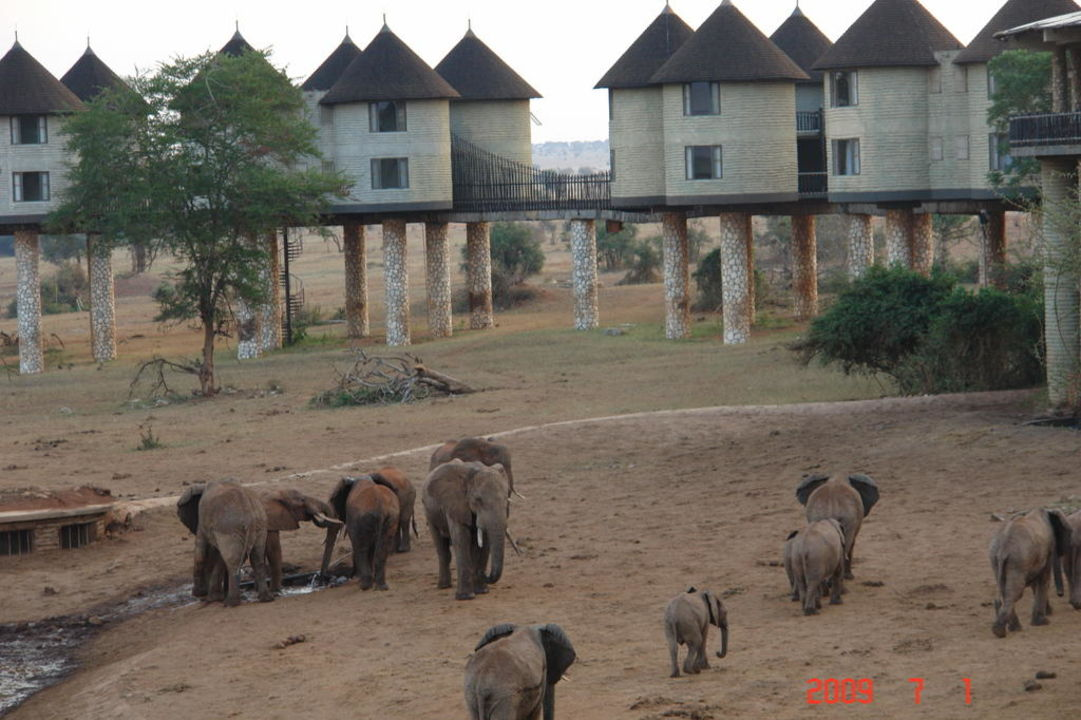 Safari Lodge Tsawo West Kenia Hotel Voi Safari Lodge