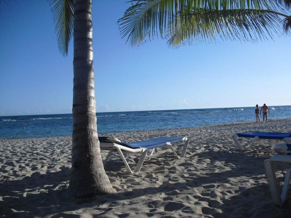 Beach Coral Costa Caribe
