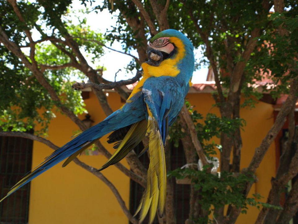 Papagei Dunes Hotel & Beach Resort