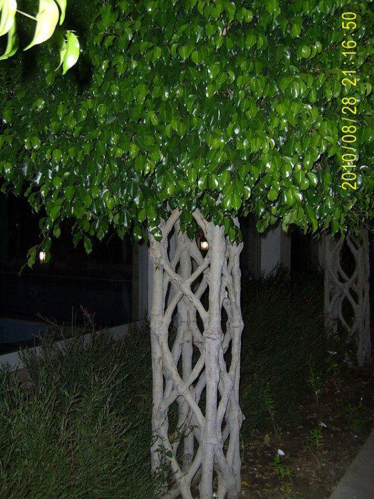 Дерево у бассейна Hotel Royal Atlantis Spa & Resort