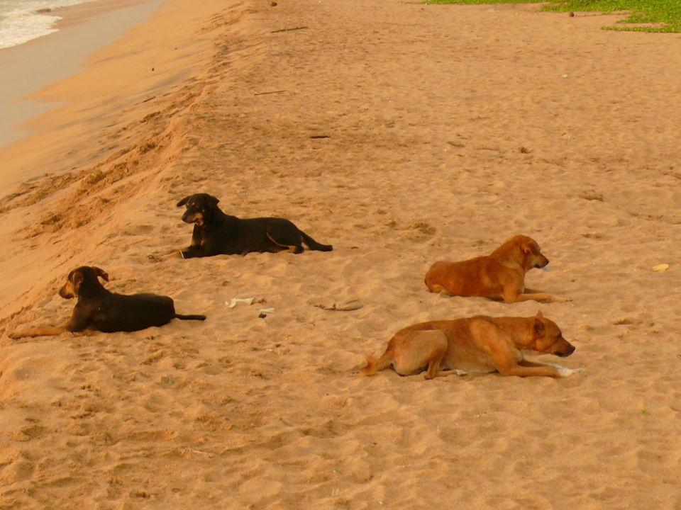 """Gesittete """"Beachdogs"""" Hotel Emerald Bay  (geschlossen)"""
