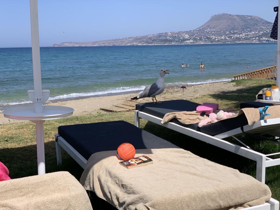 Strand Kiani Beach Resort Family All Inclusive