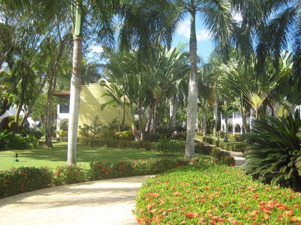 Tuin van het hotel Catalonia Gran Dominicus
