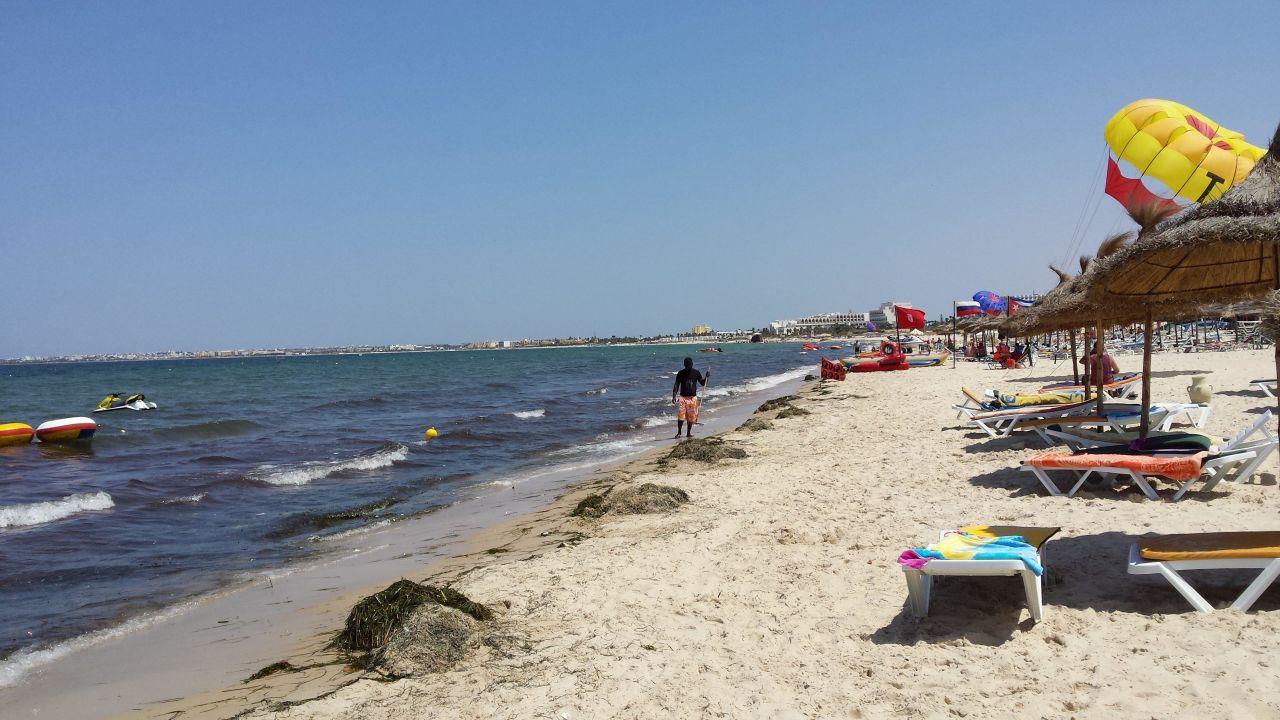 Seegras Am Strand