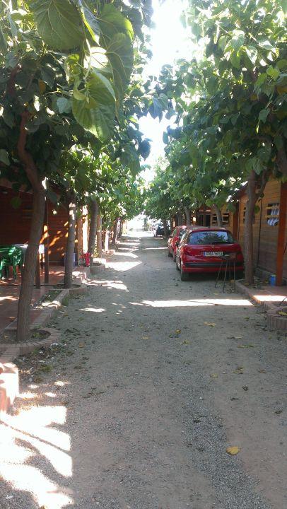 Zwischen den Bungalows Camping Playa y Fiesta