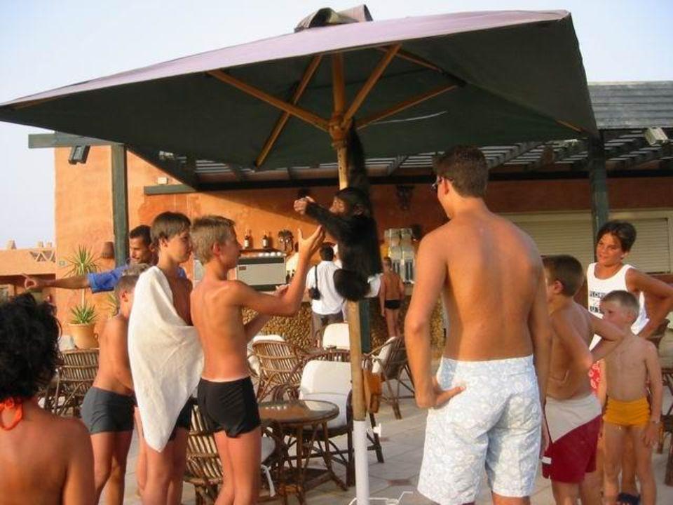 Chita an der Poolbar Hotel Hauza Beach Resort