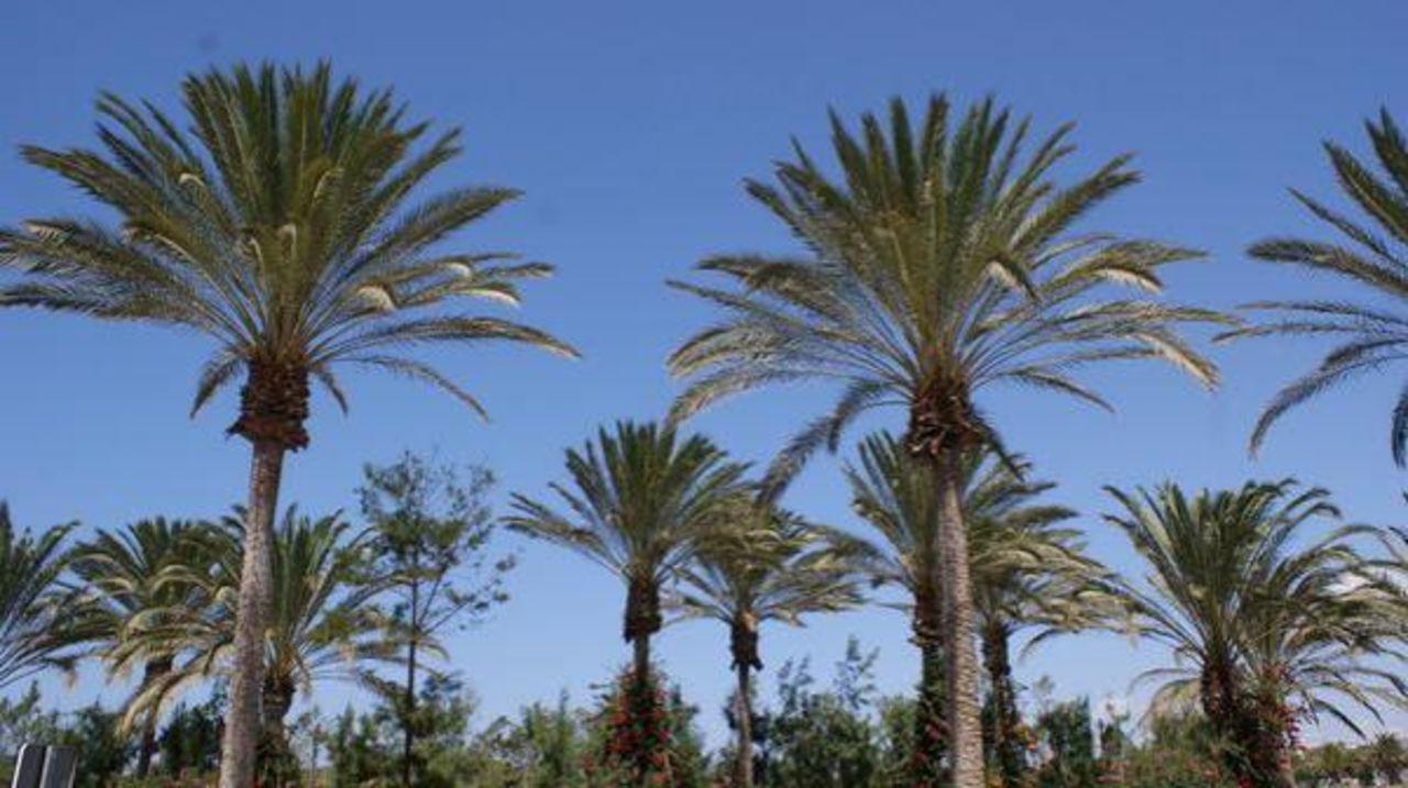 Über die Straße SBH Costa Calma Beach Resort