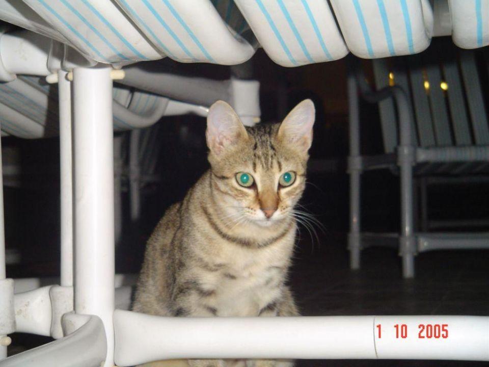 Katze Daphne Monastir Center