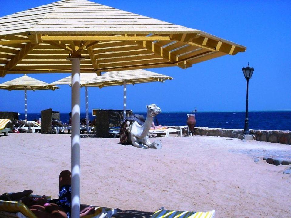 Plaża SUNRISE Holidays Resort (Adults Only)