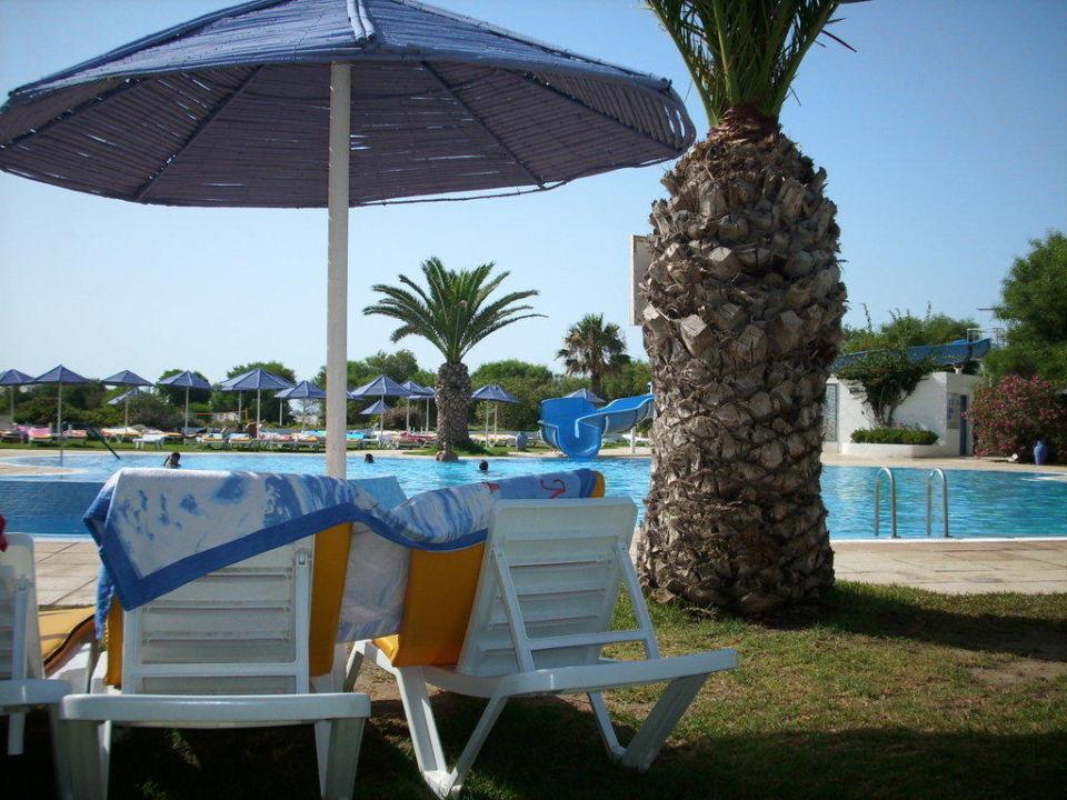 Palme SplashWorld Venus Beach