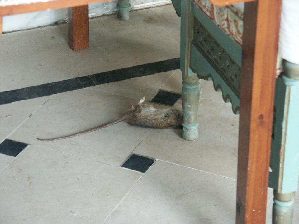 Ratten Hotel Parc Resort