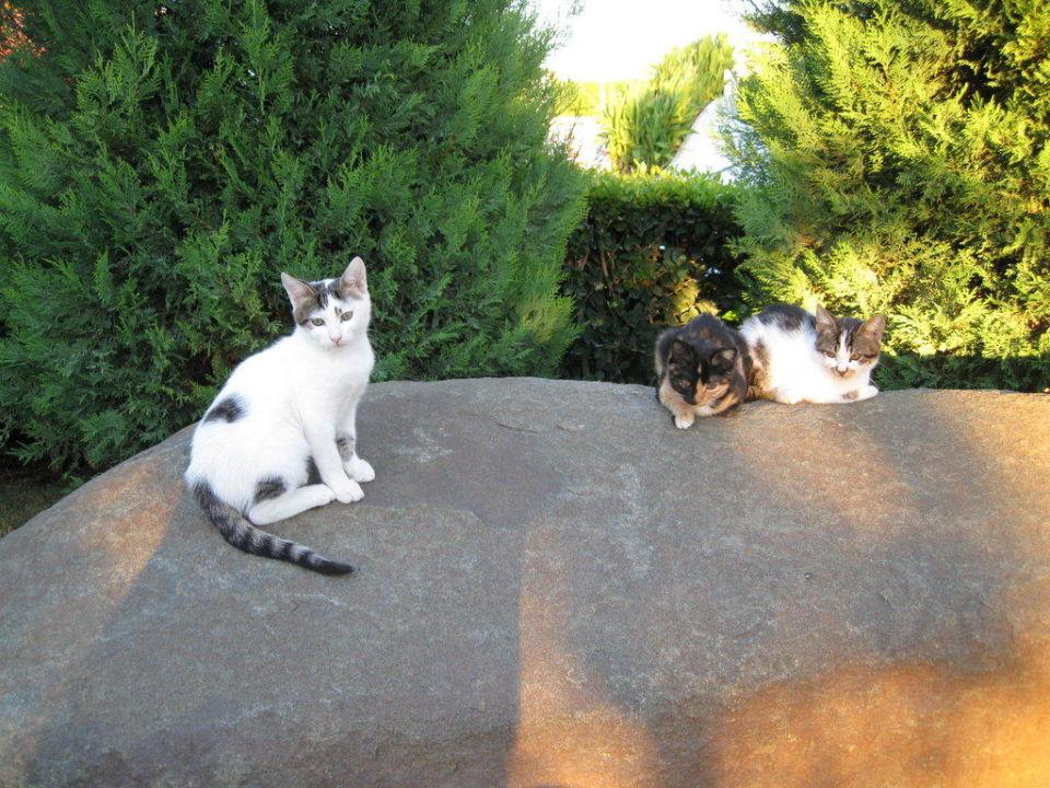 Wilde Kätzchen in der Gartenanlage Hotel Limak Lara de Luxe