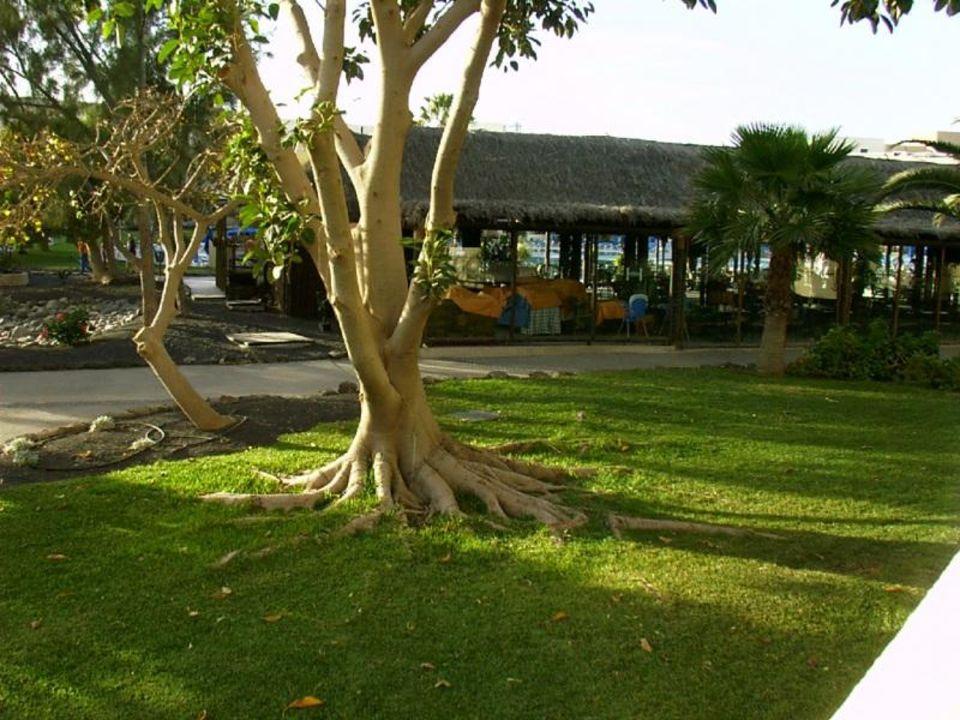 Garten Playa Dorada Hesperia Lanzarote Playa Dorada