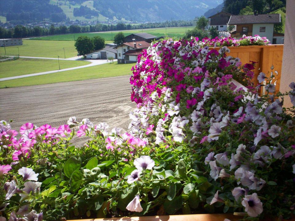 Auf dem Balkon immer eine Blumen Pracht Pension Monitzer