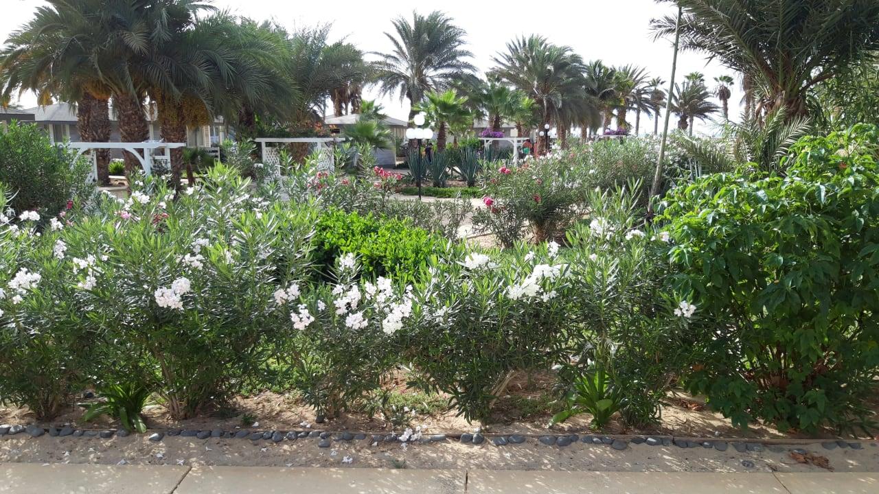 Gartenanlage Oasis Atlantico Belorizonte