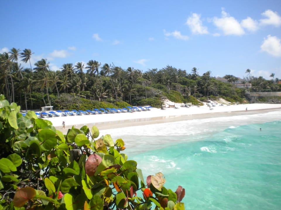Blick zum Strand hin vom Garten aus Hotel The Crane Resort & Residences